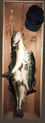 Largemouth bass stringer mount in shadow box.
